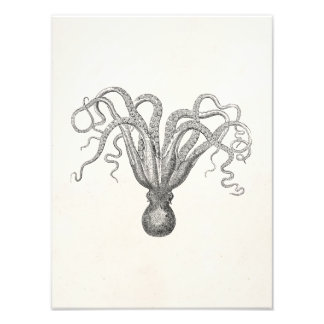 Vintage Octopus Poulpe Eight Armed Cuttle Fish Photographic Print