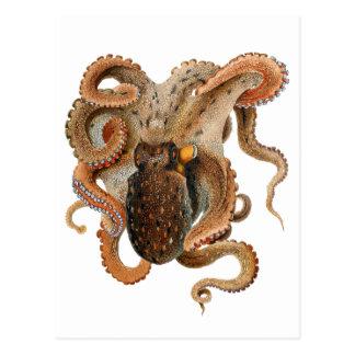 Vintage Octopus Vulgaris, Marine Life Animals Postcard