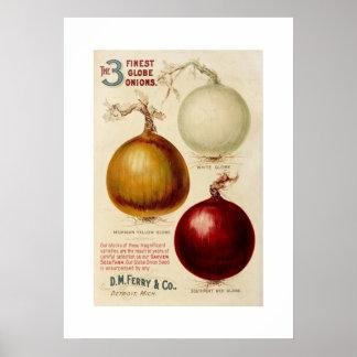 Vintage onion chart illustration print