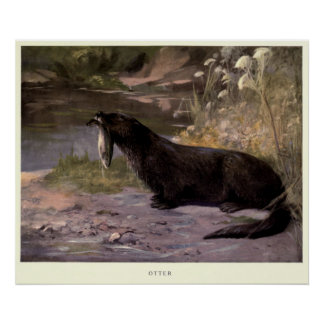 Vintage Otter Painting (1909) Poster
