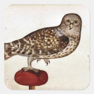 Vintage Owl Illustration Square Sticker