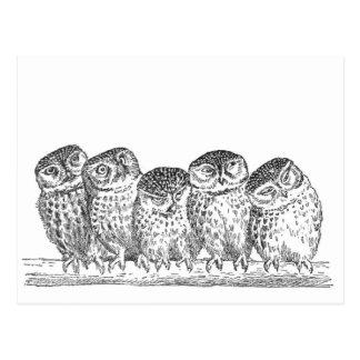 Vintage Owls Post Cards