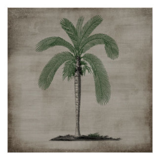 Vintage Palm Tree Poster