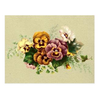 Vintage Pansies Bouquet Postcard