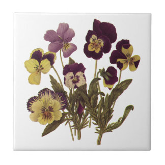 Vintage Pansies in Bloom, Floral Garden Flowers Small Square Tile