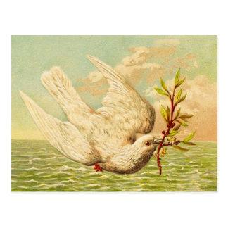 Vintage Peace Dove Postcard