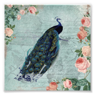Vintage Peacock and Roses Illustration Photo Print
