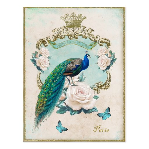 Vintage Peacock baroque Frame with roses Postcard