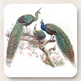 Vintage Peacock Birds Wildlife Animals Coaster