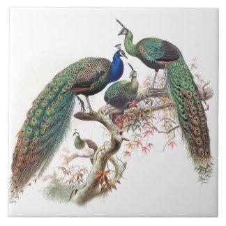Vintage Peacock Birds Wildlife Animals Tile