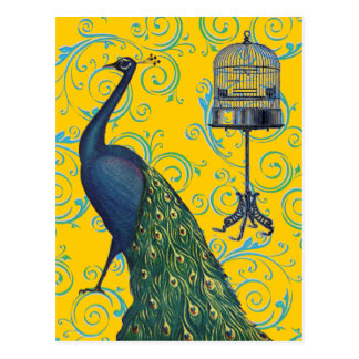 Vintage Peacock & Cage Postcard