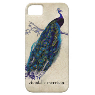Vintage Peacock Full Feathers on Tattered Lace iPhone 5 Covers