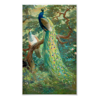 Vintage Peacock Image Poster