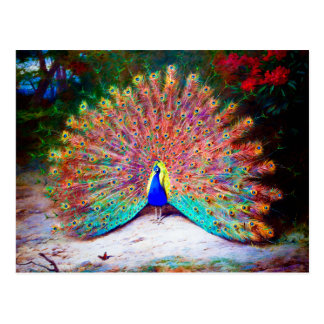 Vintage Peacock Painting Post Card
