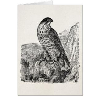Vintage Peregrine Falcon Personalized Retro Birds Card