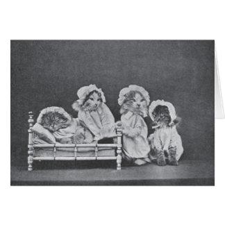 Vintage Photo - Bedtime for Four Kittens, Card