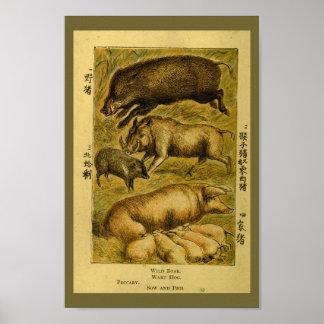 Vintage Pigs Hog Boar Natural History Print