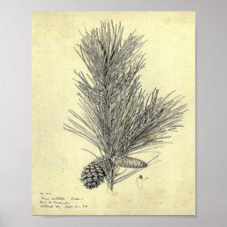 Vintage Pine Branch Poster
