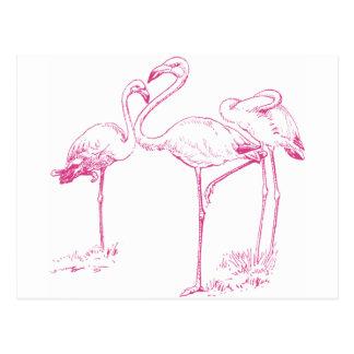 Vintage  Pink Flamingo Drawing Postcard