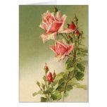 Vintage Pink Garden Roses for Valentine's Day Greeting Cards