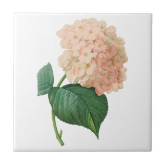 Vintage Pink Hydrangea Hortensia Flower by Redoute Tile