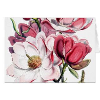 Vintage Pink Magnolia Flower Botany Illustration Card