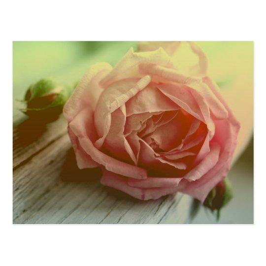 Vintage Pink Rose Flower Floral Postcard