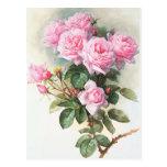 Vintage Pink Roses Painting Postcard