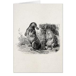 Vintage Platypus Porcupine Anteater Template
