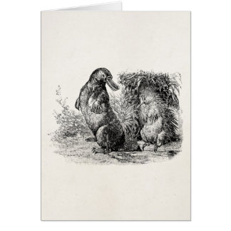 Vintage Platypus Porcupine Anteater Template Card