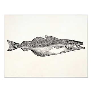 Vintage Pollack Fish - Aquatic Fishes Template Art Photo