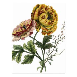 Vintage Poppy Flowers Postcard