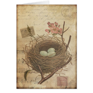 Vintage Postcard Bird Nest and Eggs