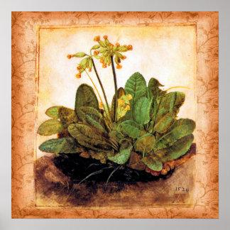 Vintage Primrose Primula Flower Poster