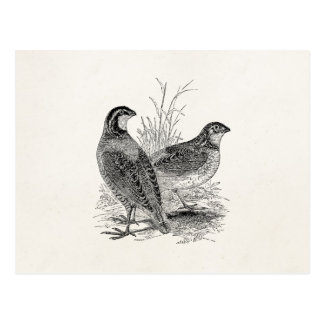 Vintage Quail Birds - Personalized Retro Game Bird Postcard