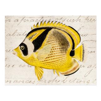 Vintage Raccoon Butterfly Fish - Antique Hawaiian Postcard