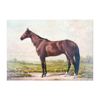 VINTAGE RACE HORSE DRAWING. BROWN HORSE CANVAS PRINT