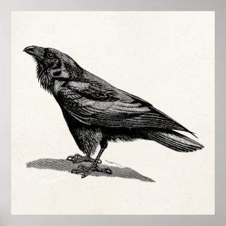 Vintage Raven Crow Blackbird Bird Illustration Poster