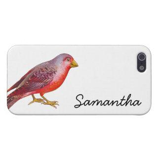Vintage Red Bird iPhone 5/5S Cases