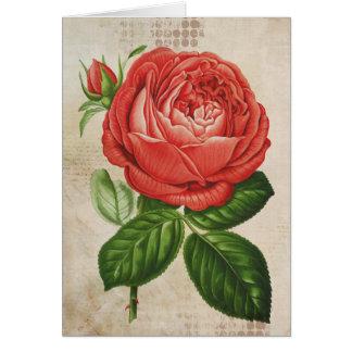 Vintage Red Hybrid Perpetual, Paul Neyron Rose Card