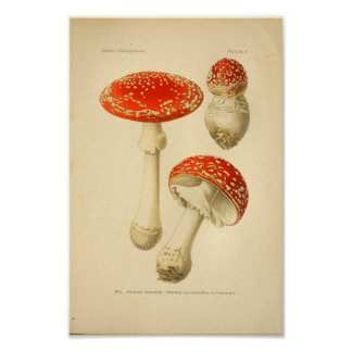 Vintage Red Mushrooms Art Print French