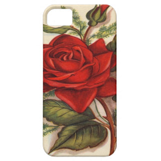 Vintage, Red Rose iPhone 5 Barely There Case
