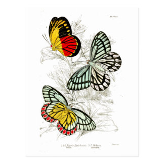 Vintage Red Yellow Butterflies Insects Postcard