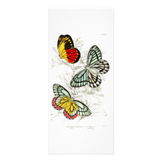 Vintage Red Yellow Butterflies Insects Rack Cards