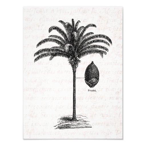 Vintage Retro Brazilian Palm Tree Template Palms Photographic Print