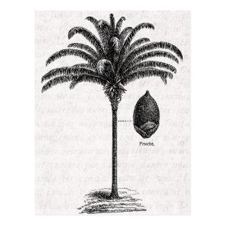 Vintage Retro Brazilian Palm Tree Template Palms Postcard