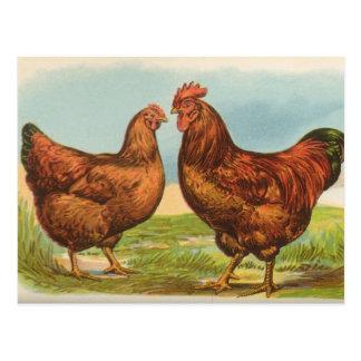 Vintage Rhode Island Red Chicken Postcard