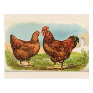 """Vintage """"Rhode Island Red Chicken"""" Postcard"""