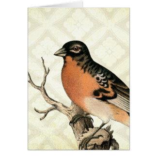 Vintage Robin Greeting Card