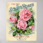 Vintage Rose Flower Catalogue Cover Illustration
